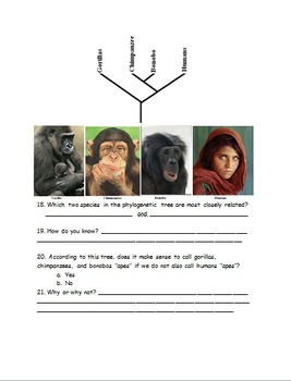 Aim: How do you read and use evolutionary trees?