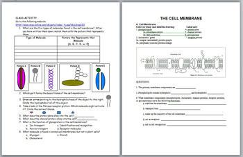 Aim: What is the nature of the cell membrane?