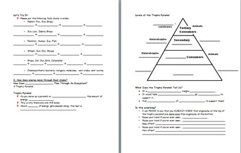 Aim: Why don't lions have predators? (Food chains and trophic pyramids lesson)