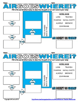 Air Goes Where? A Respiratory Worksheet