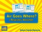 Air Goes Where? A Respiratory Worksheet