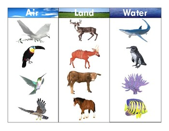 Air-Land-Water Animals:Realistic Clipart-Three Part Card Set 2