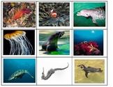Air Land Water animals sort Science ESL center cut paste t
