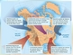 Air Masses, Fronts, Weather Maps & Symbols (Who's the next Al Roker?)