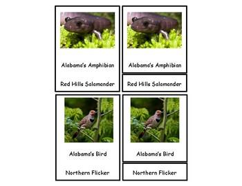 Alabama - Missouri 3 Part Cards