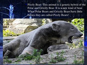 Alaska Tundra Animals