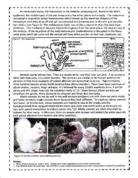 Autosomal Recessive Inheritance: Albinism