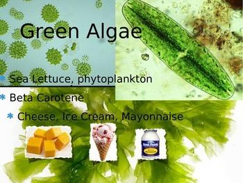 Algae powerpoint