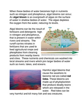 Algal Blooms and The Depletion of Oxygen in the Ocean