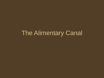 Alimentary Canal