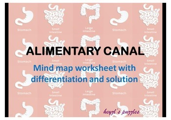 Alimentary canal mind map with differentiated tasks and answer key