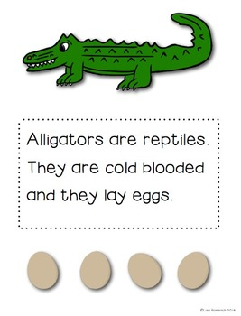 All About Alligators a non fiction book for beginning readers