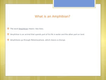 Amphabians- All About Amphabians-No Prep Work