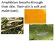 All About Amphibians