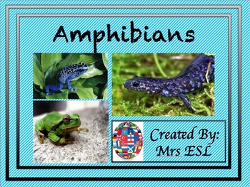 All About Amphibians