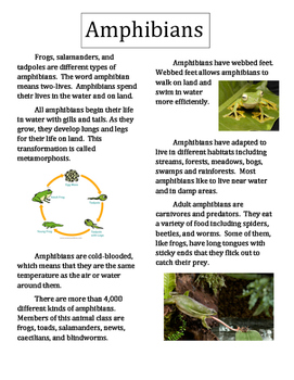 All About Animals- Amphibians