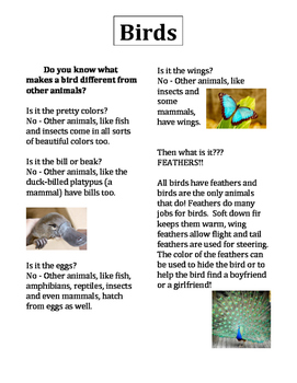 All About Animals- Brids