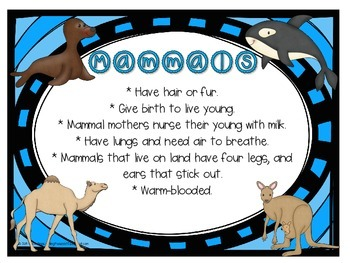 All About Animals! CCSS Aligned to teach about the 5 Vertebrate Animal Groups