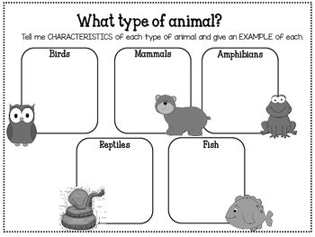 All About Animals Packet