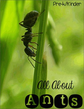 All About Ants