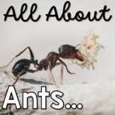 All About Ants Life Cycle and More!