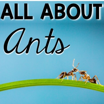 All About Ants Life Cycle