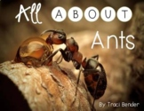 All About Ants {An Ant Life Cycle Unit}