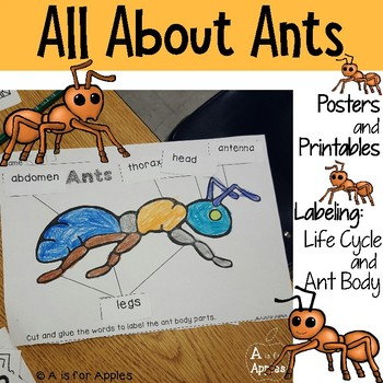 All About Ants! {Life Cycle, Ant Bodies}