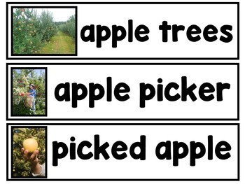 All About Apples Mega Bundle {Ladybug Learning Projects}