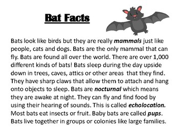 All About Bat Facts Flip Book