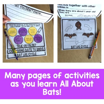 All About Bats Flip Up Book