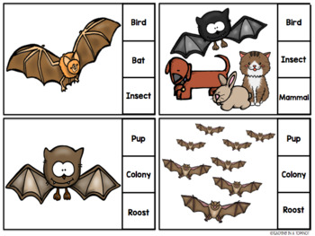 All About Bats Clip Cards