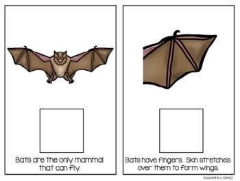 All About Bats Interactive/Adapted Book