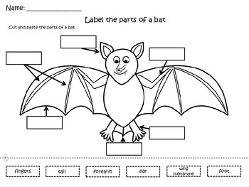 All About Bats Mini Unit