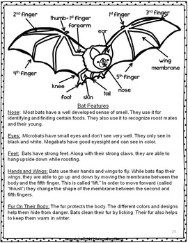 All About Bats: Reading and Writing Unit
