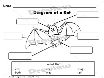 Bats, Writing Prompts, Graphic Organizers, Diagram
