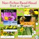 All About Bees Craft & Non-Fiction Read Aloud