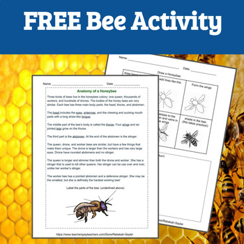 Printable Bugs: All About Bees FREE SAMPLE