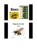All About Bees PowerPoint slide show