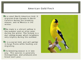 Birds- All About Birds!