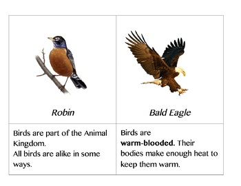 All About Birds