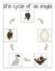 All About Birds Interactive Science Unit