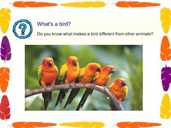 All About Birds Flipchart