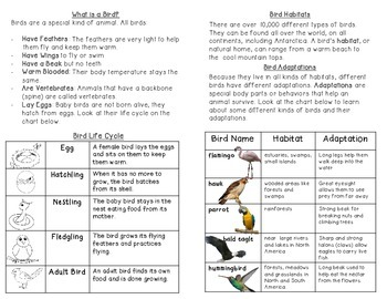 Birds - All About Birds: Nonfiction minibook and craftivity