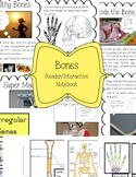 All About Bones Interactive Notebook and Reader