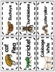 All About Bugs and Insects Word Wall Cards