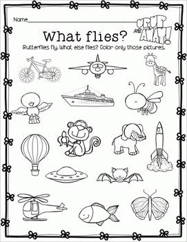 All About Butterflies