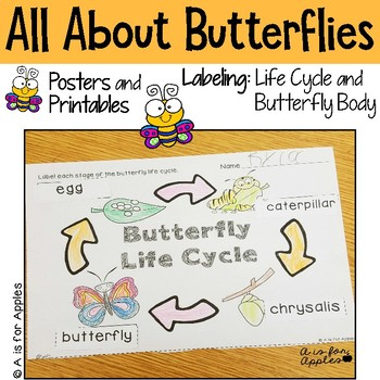 All About Butterflies! {Life Cycle, Butterfly Bodies}