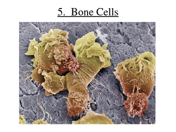 All About Cells: Powerpoint, Guided Notes, and Webquest