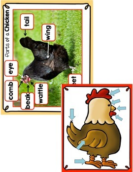 All About Chickens - Chicken Life Cycle and Sequencing
